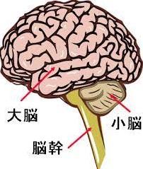 脳1.jpg
