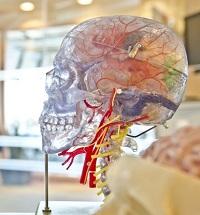 脳2-200.jpg