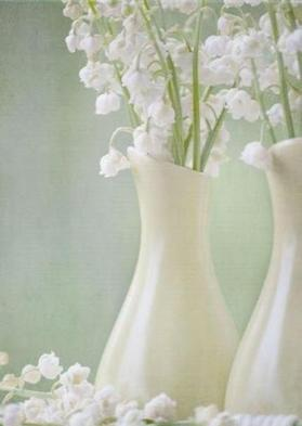 白い花.jpg