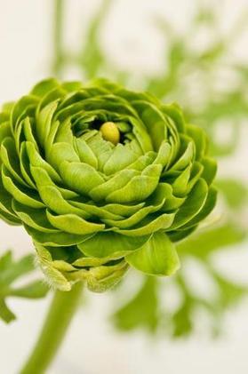 緑の花.jpg