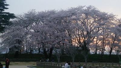 シノノメ423.JPG