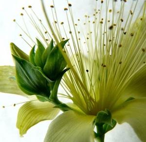 緑の花2.jpg