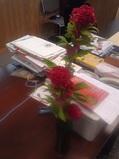 デスクの花①.jpg