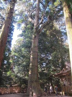 h3 高千穂神社.jpg